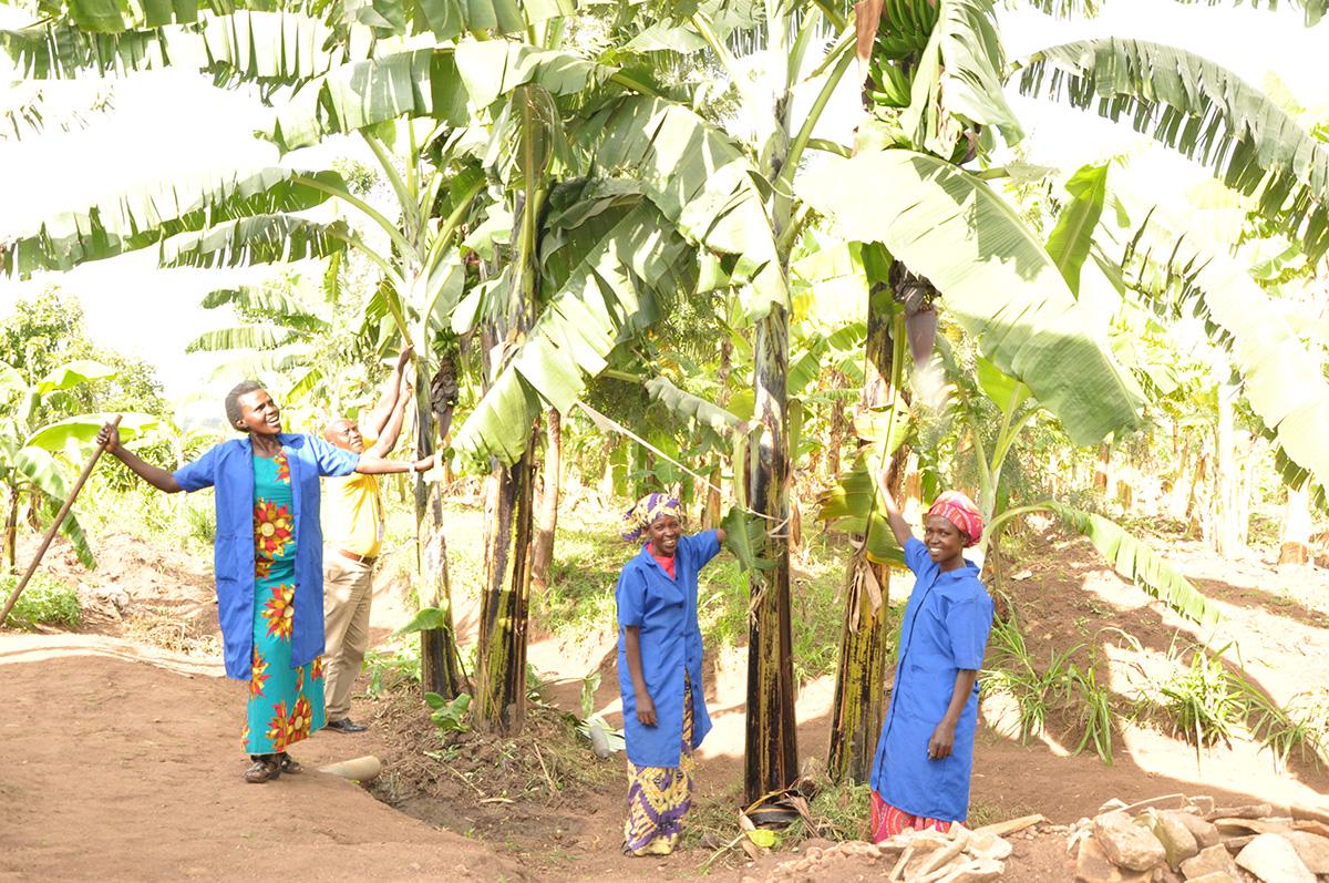 APPUI AUX FAMILLES AFIN D'AUGMENTER LEUR PRODUCTION AGRICOLE